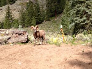 Bighorn Surveyor